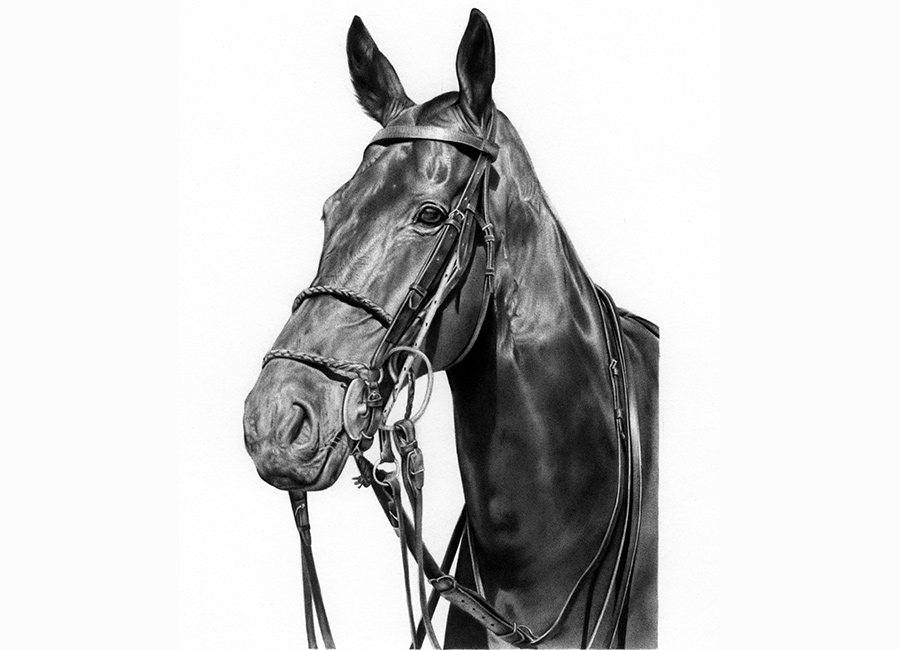 Polo-Pony-horse-equestrian-art